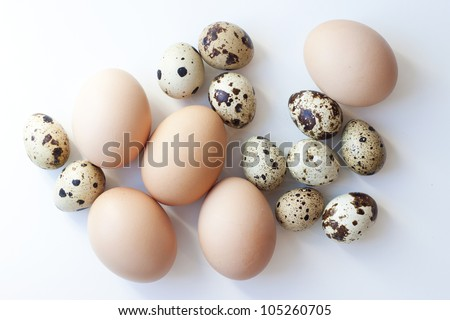 a lot of different eggs