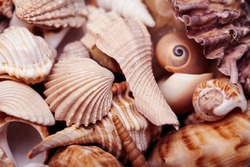 a lot of different empty sea shells on background, macro details