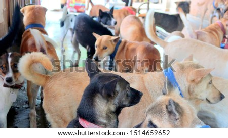 a lot of Dogs in dog shelters #1514659652