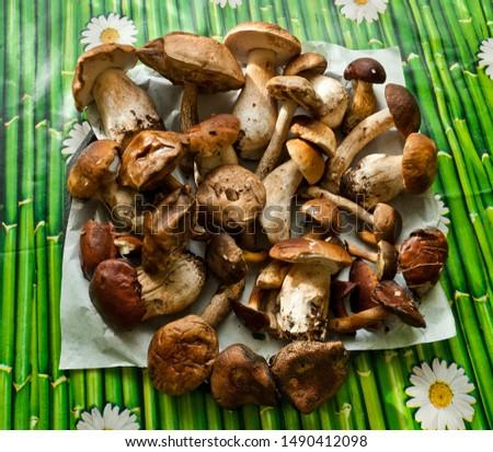A lot of edible mushrooms (boletus edulis bull, borowik szlachetny, prawy, prawdziwek, leccinum scabrum, kozak, kozlarz babka, imleria badia, podgrzybek brunatny) on the table. Mushroom picking.  Zdjęcia stock ©