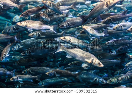 a lot of fish in the water #589382315