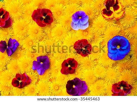 a lot of flowers closeup