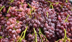 A lot of Fresh Crimson Seedless Grapes in the market with full frame.
