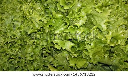A lot of fresh, freshly picked lettuce leaves #1456713212