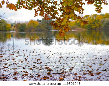 A lot of leafs has fallen into the lake