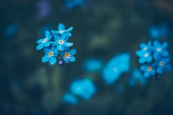 A lot of little blue flowers on a blue background.