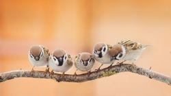 a lot of little funny birds sitting on a branch and looking curiously