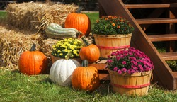 a lot of mini pumpkin at outdoor farmers market space background halloween thanksgiving