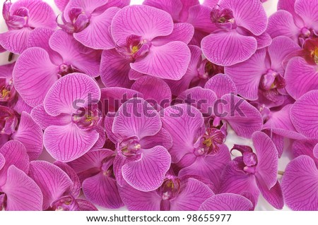A lot of  Orchid Flowers