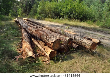 A lot of pile of wood in summer forest.