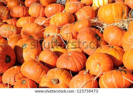 a lot of  pumpkin at outdoor market place