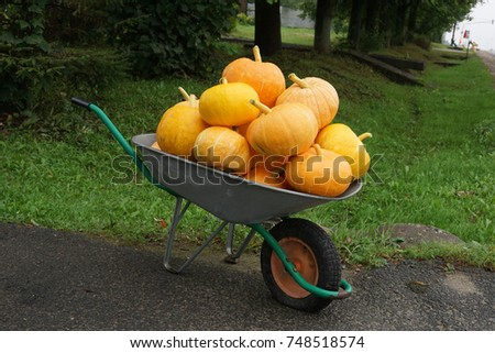 A lot of pumpkins of a new crop stacked in a wheelbarrow, which stands near the road for sale. #748518574