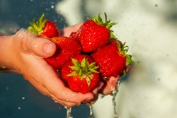 A lot of ripe red strawberries in the palms of the child's hands. Large juicy berries in a spray of water. Juicy big berry of red strawberry, in an open palm, close-up.