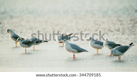 a lot of sea gulls at the ...