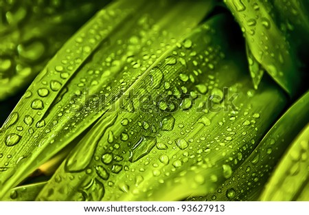 a lot of water drops over a green leaf