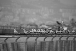A lots of seagulls on the railing