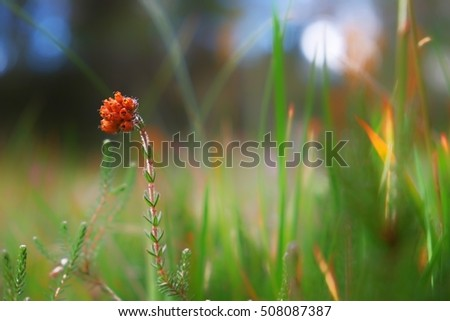 stock-photo-a-lovely-blurry-forest-floor
