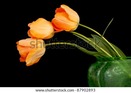 A Lovely Closeup of Three Orange or Tangerine Colored Tulips with Leaves in an Antique Green Vase Against Black Background