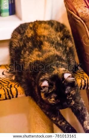 A lovely playful cat #781013161