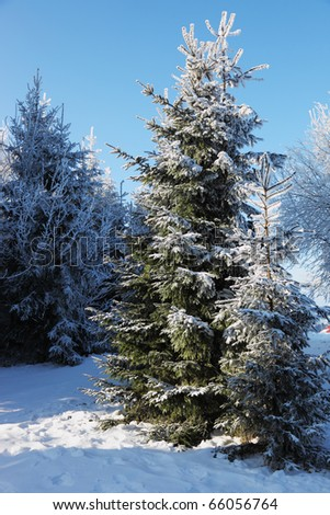 A lovely sunny Christmas Day.  Snow-covered glade in winter forest