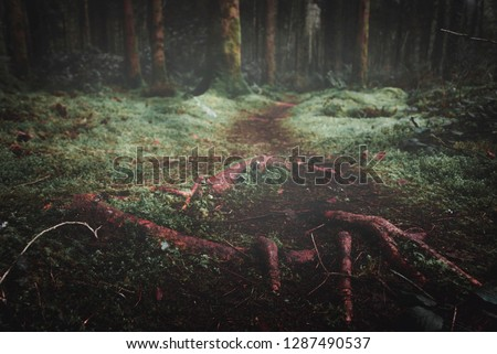 A low angle image of entangled tree roots and muddy path winding its way through the trees into the deep undergrowth of the forest. Lough Key Forest Park, Co, Roscommon, Ireland