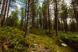 A low angle shot of a beautiful forest in Basque Country, Spain