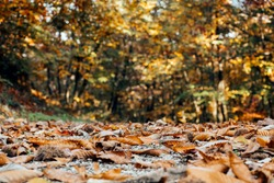 A low angle shot of colorful leaves that have fallen on the ground in the forest on  a fall day