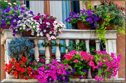 A low angle shot of pots with beautiful flowers in the balcony