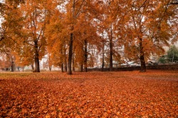 A low angle view of fallen leaves on ground at Nishat Bagh (garden) during autumn in Srinagar, Jammu and Kashmir, India