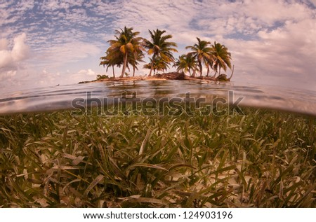 A low-lying sandy island with coconut palms is surrounded by a shallow sea grass bed off of Belize.