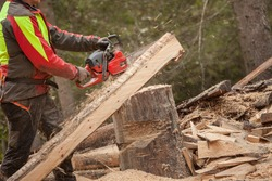 A lumberjack working safely with chainsaw and protection equipment inside an Italian forest