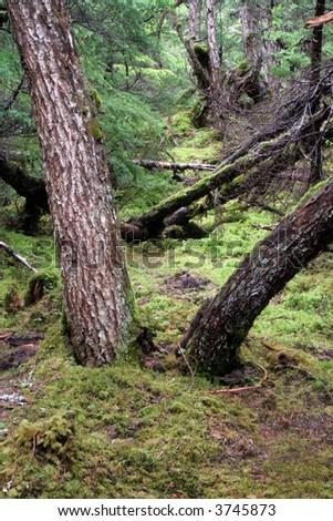 A lush, green Alaska Rain-forest landscape