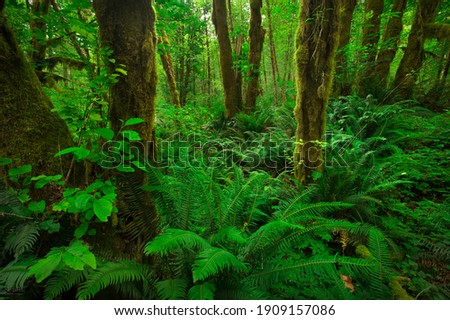 A lush green moss covered forest in the Pacific Northwest with large ferns and vines, and trees growing.