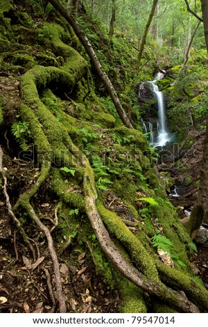 A lush rain forest waterfall with large roots and ferns