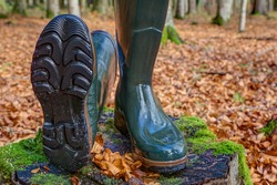 A lying and a standing rubber boot in the autumn forest. For hunters, hikers and everyone who likes to be in nature, rubber boots are the right shoes, waterproof, robust and non-slip soles.