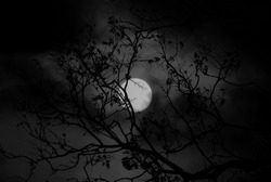 A macabre digitally manipulated photograph of the moon shining through the silhouette of an old tree.