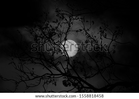Photo of  A macabre digitally manipulated photograph of the moon shining through the silhouette of an old tree.