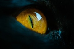 A macro close up of a piercing bright yellow cat eye of a black cat.