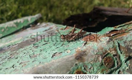 Stock Photo A macro close-up of a summertime grasshopper on a fence post. Wooden texture, empty wood background and old paint on rusty iron.