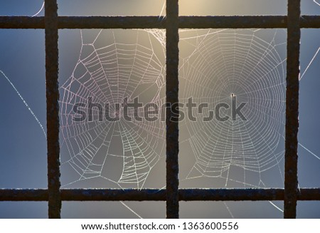 A macro image of two spider webs, which have been spun adjacent to one another, in separate holes in a steel mesh fence. The dawn sunlight is glowing from behind. Taken at Goodwood Island Wharf, NSW.
