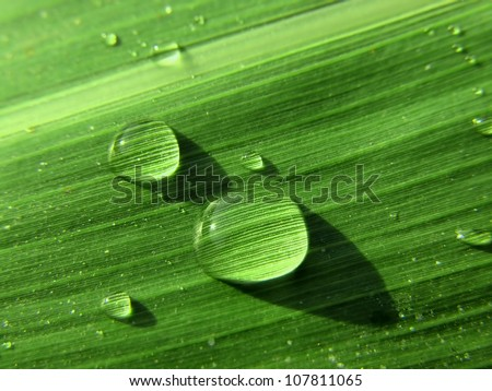 A macro image showing water drops on leaf with texture details.