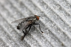 a macro of a fly on a gray building material. detailed macro of a fly.