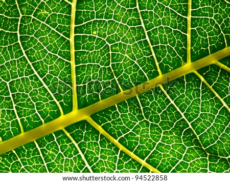 A macro of a leaf texture to back lighting