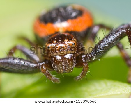 A macro of a spider