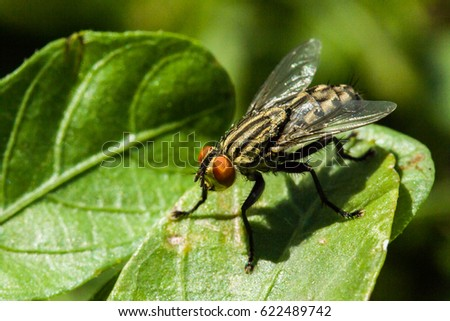A macro or close-up photo of a fly on a leaf. #622489742