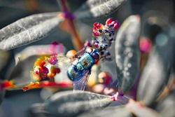 A macro photo of a fly on a plant in nature