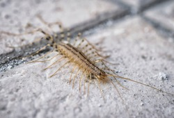 A macro shot of a centipede on a concrete floor
