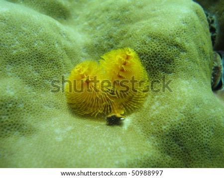 A macro shot of a christmas tree worm taken with a shallow depth of field