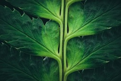 A macro shot of a gree plant with thick leaves