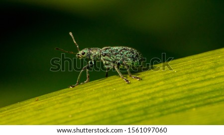 A macro shot of an insect